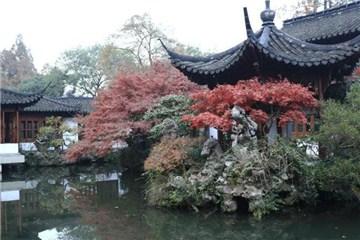 杭州西湖初冬红枫惹人醉