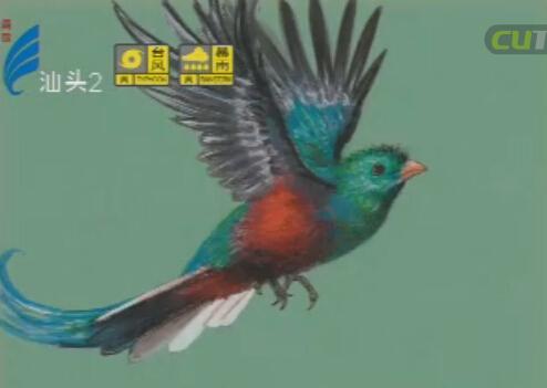 潮汕风 萧晖荣:鸟鸣花开 再呈异彩 2016-08-01