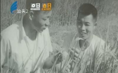 水稻专家创佳绩 年过八旬献余热 2017-08-21