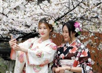 日本公布樱花开放预报:樱花最早于3月22日绽放