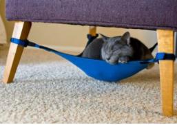 """这个""""猫窝""""太豪华?硅谷宠物猫住1500美元公寓"""