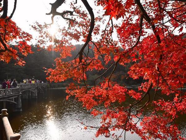 江西庐山:枫叶美景迎客来
