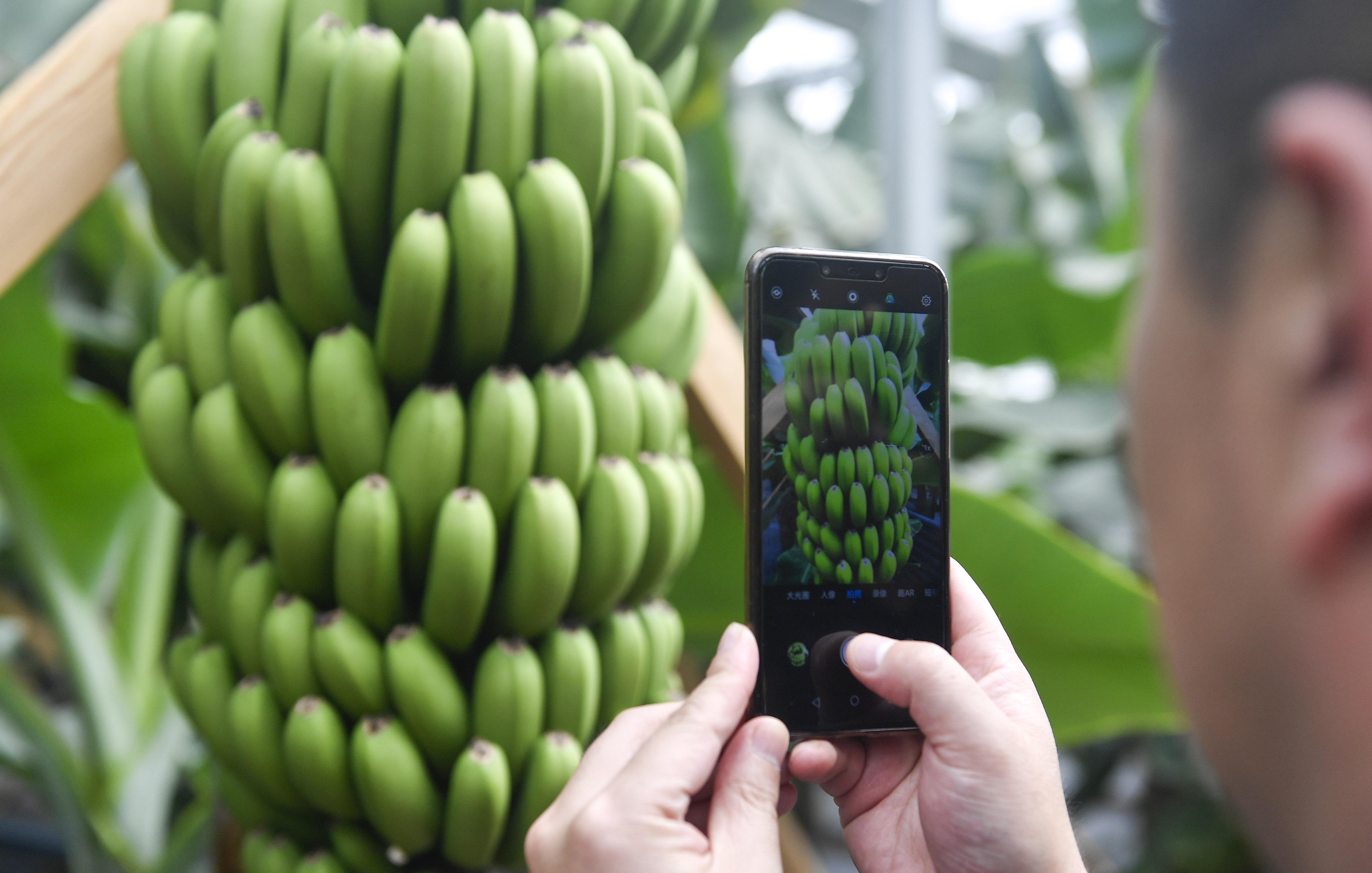 香蕉,究竟治便秘,还是致便秘?医生这样说!