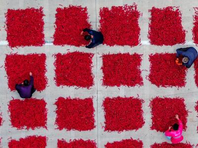 五谷丰登听民声——写在2019年中国农民丰收节之际