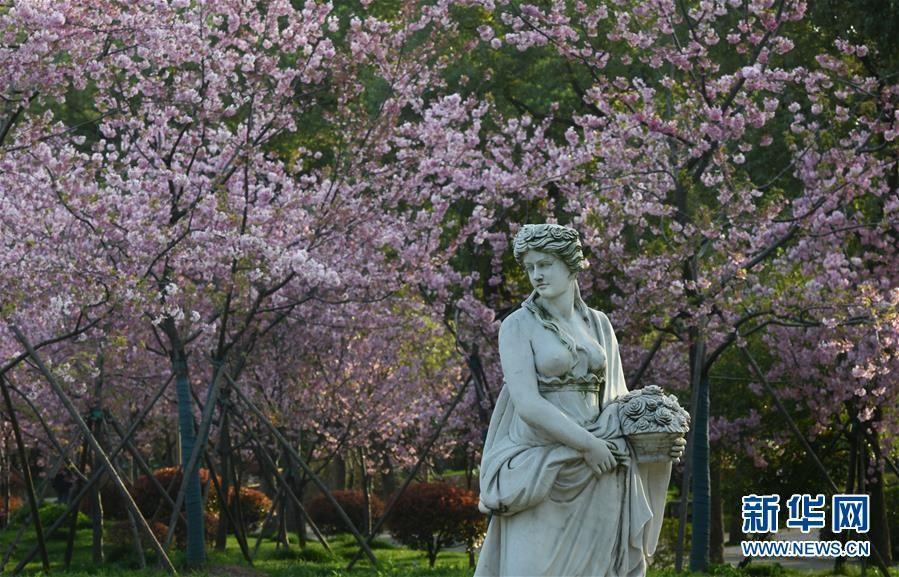 武汉:东湖畔 樱花开