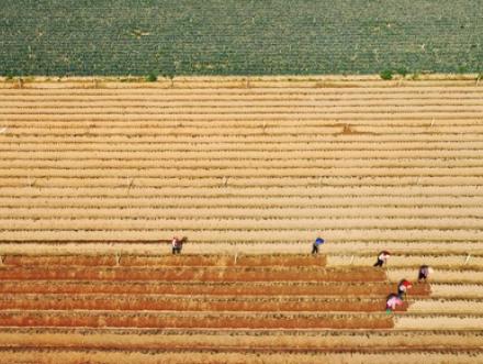 疫情若恶化,全球或面临严重粮食危机!我们怎么办?