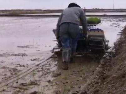 海水稻在青藏高原柴达木盆地插秧