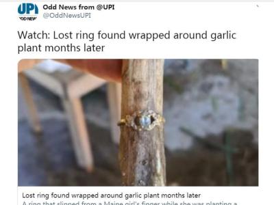 """大蒜上""""长出""""戒指!原是9个月前种菜时弄丢"""