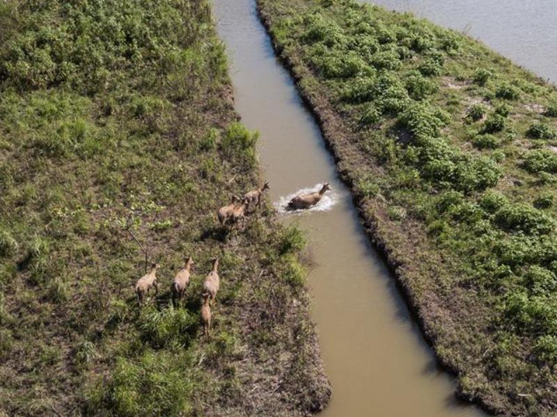 探访东洞庭湖麋鹿和鸟类救治避难中心